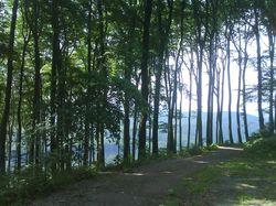 Forêt dans Vienne, le paradis des coureurs